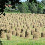 Heinäpeltoa Etelä-Suomessa